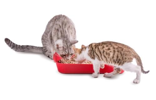 猫トイレのニオイを嗅ぐ2匹の猫