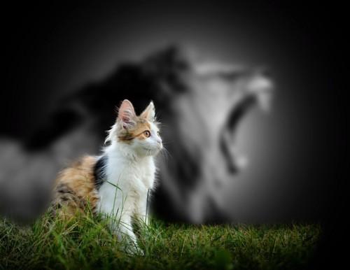 芝生の上の猫と背景にトラ