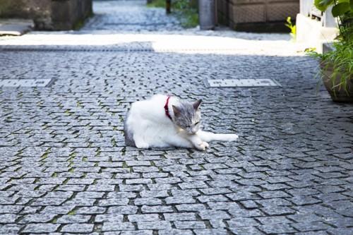 藍島の石畳の猫