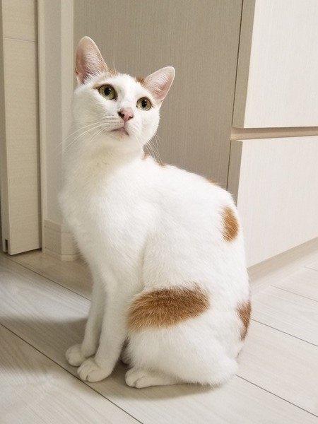 現在の愛猫
