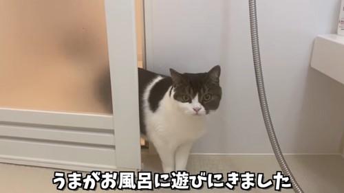 お風呂に入ってきた猫