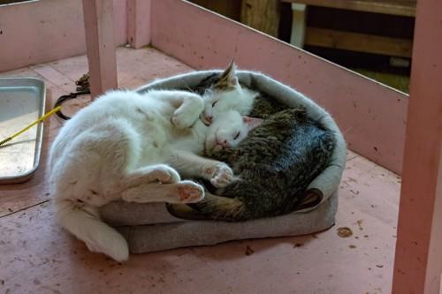 ぎゅうぎゅうで寝る猫