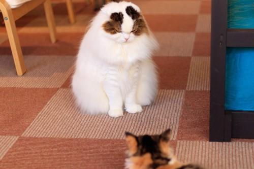 退治する猫