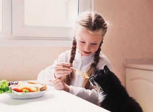 女の子に餌を貰う猫