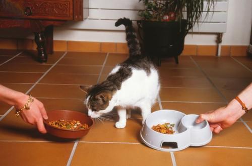 二人から餌を差し出される猫