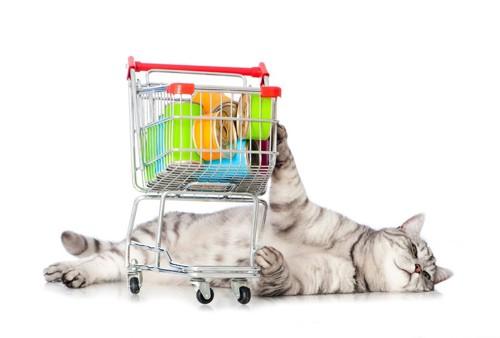 猫と買い物カート