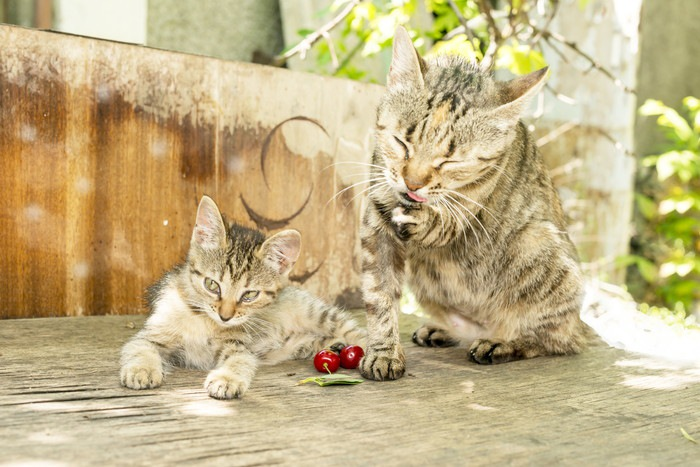 庭にいる2匹の猫