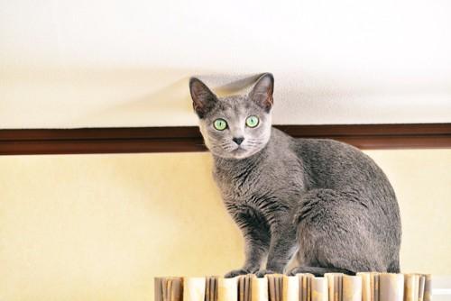 カーテンレールに乗ってフリーズする猫