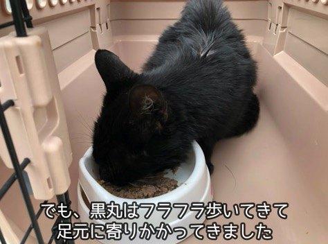 人懐こい黒猫