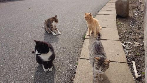 近寄ってくる猫たち