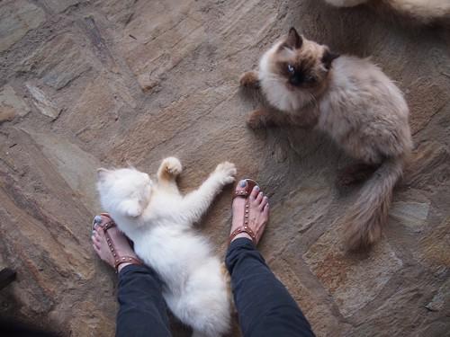 2匹の猫と人の足