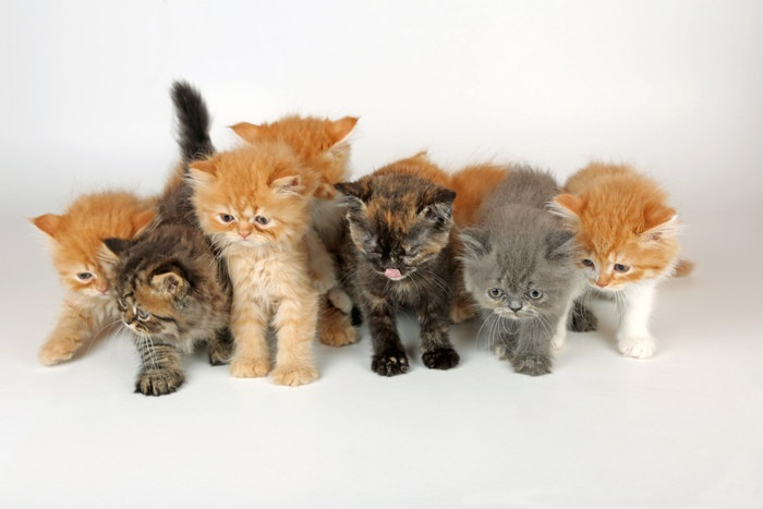 たくさんの子猫