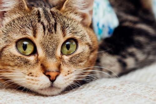皮膚病で薬を待つ猫