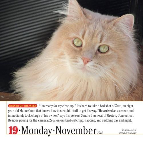 カレンダーの猫2