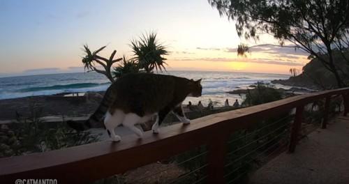 フェンスの上を歩く猫