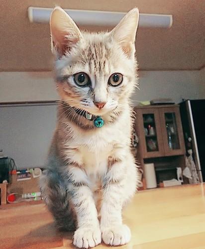 机の上にのる猫
