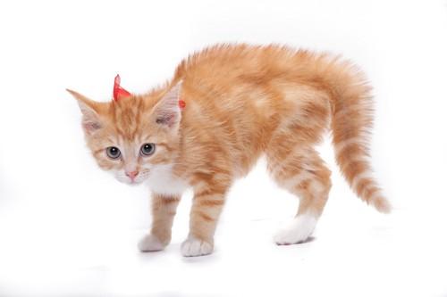 怯えて身体中の毛を逆立てている子猫