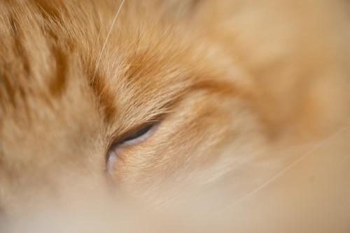 寝ている猫の目元
