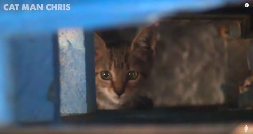 資材の下に隠れる子猫