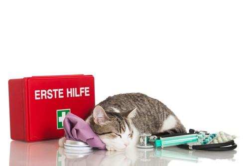 ノミの薬と寝ている猫