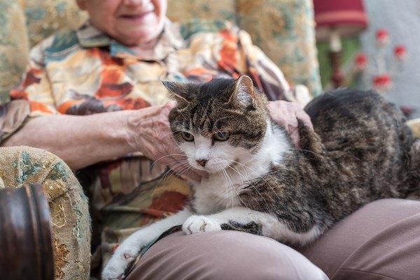 老人の膝の上にいる猫
