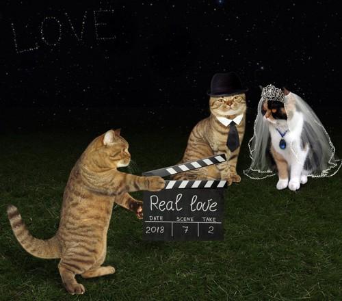 猫達の結婚式