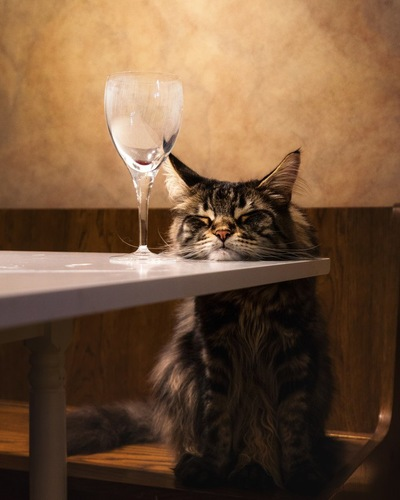 炭酸水と猫