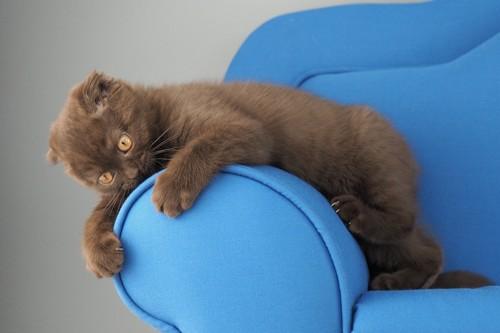 ソファの肘掛けにじゃれる子猫