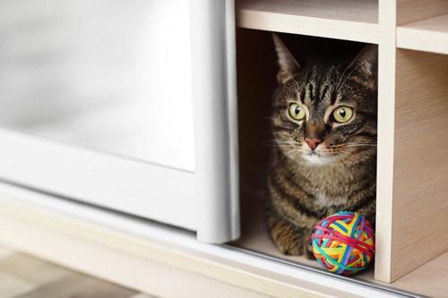 棚にはいる猫