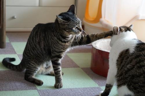 猫にパンチをする猫