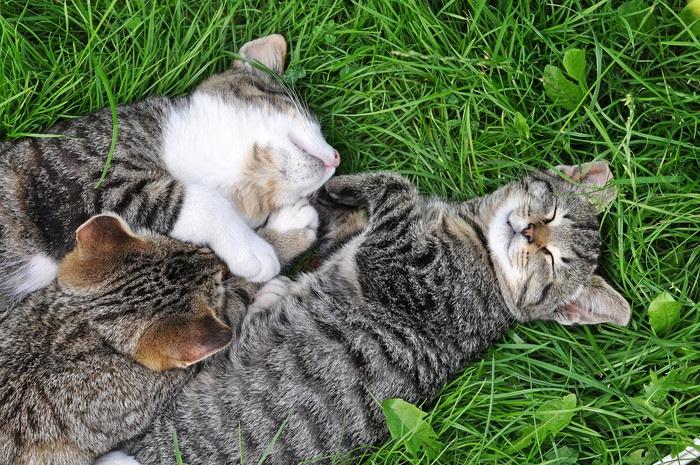 草の上で寝る子猫