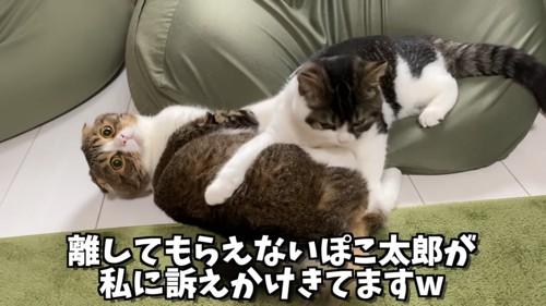 クッションから落ちた猫と上に乗る猫