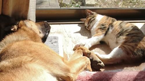 仲良くお昼寝する犬と猫