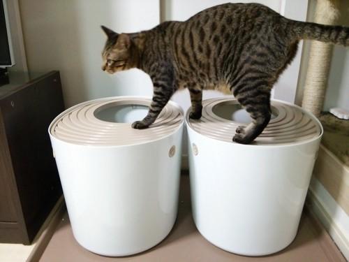 トイレに乗る猫ちゃん