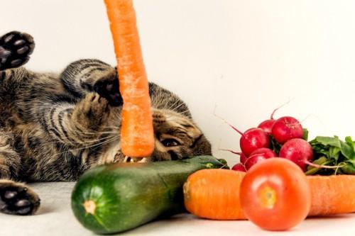 人参を見つめる猫