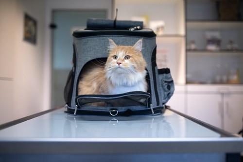 診察台に置かれたキャリーケースから顔を出す猫