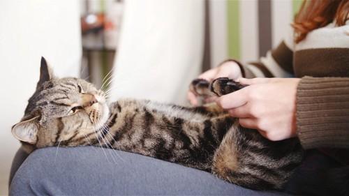 マッサージを受ける猫