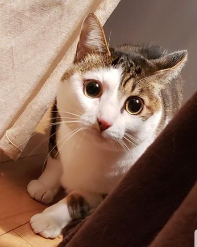 隠れるまんまるな猫