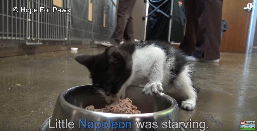 食べる子猫