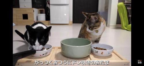フードを食べる猫を見る猫