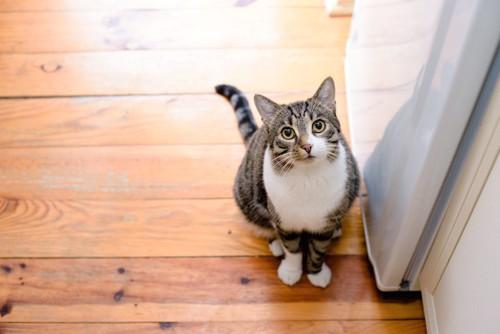 リビングでこちらを見上げて座る猫