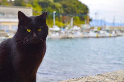 青島の港と見つめる黒猫