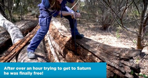 木をはぎ取る女性