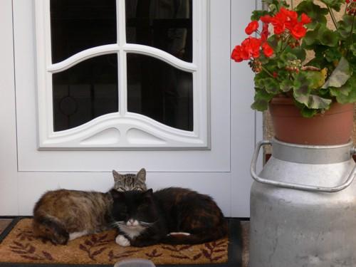 玄関にいる猫達