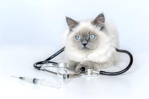 聴診器を首にかけた猫と注射器
