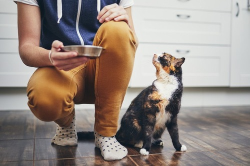 食器を持った人を見る猫