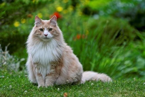 お花畑にいる猫