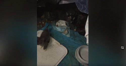 メッシュケージの中に猫