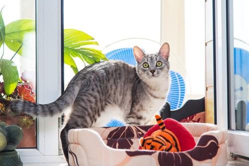 扇風機とベッドと猫