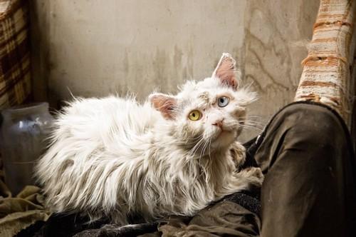 毛並みが悪い猫